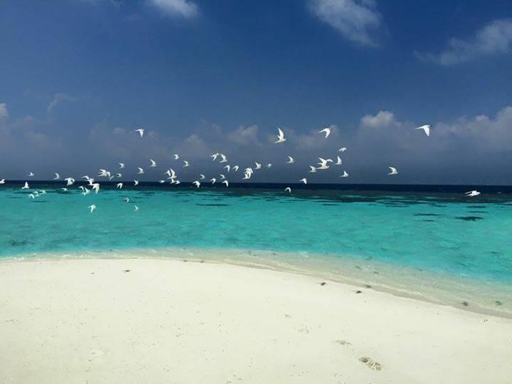Maldives airbnb