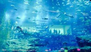 Dubai Aquarium itinerary of dubai