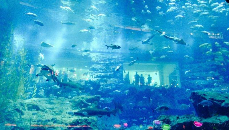 Dubai Aquarium itinerary of dubai