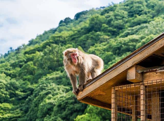 One Day in Kyoto – Kyoto Day Trip