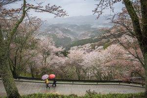Nara day trips from kyoto