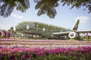 Miracle Garden Dubai Facts