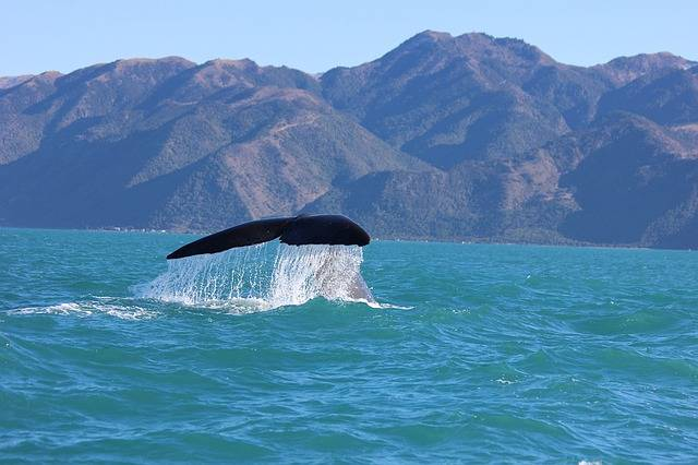 whale watching kaikoura activities